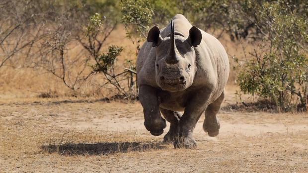 rhinoceros 6 full crack-8